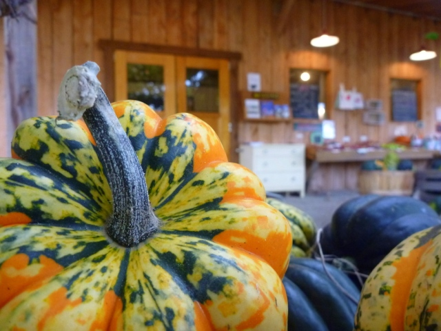 Squashes galore.