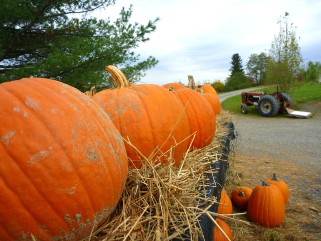 Kids love the pumpkin cart and the pumpkin patch!