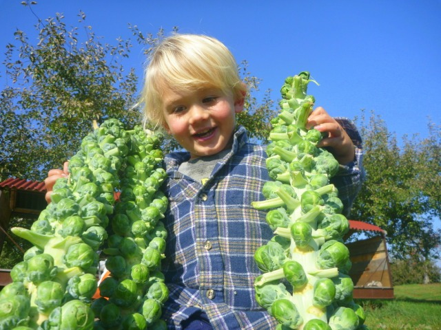11 sprouts