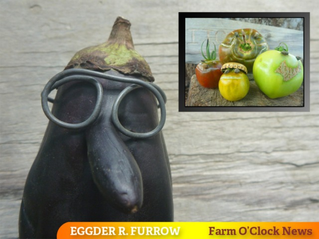 9 farmtv