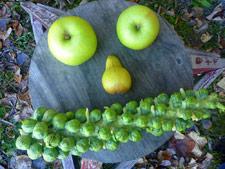 pears-tn