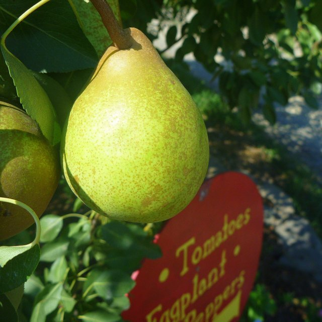 The Blog | Indian Creek Farm | Pick your own fruits